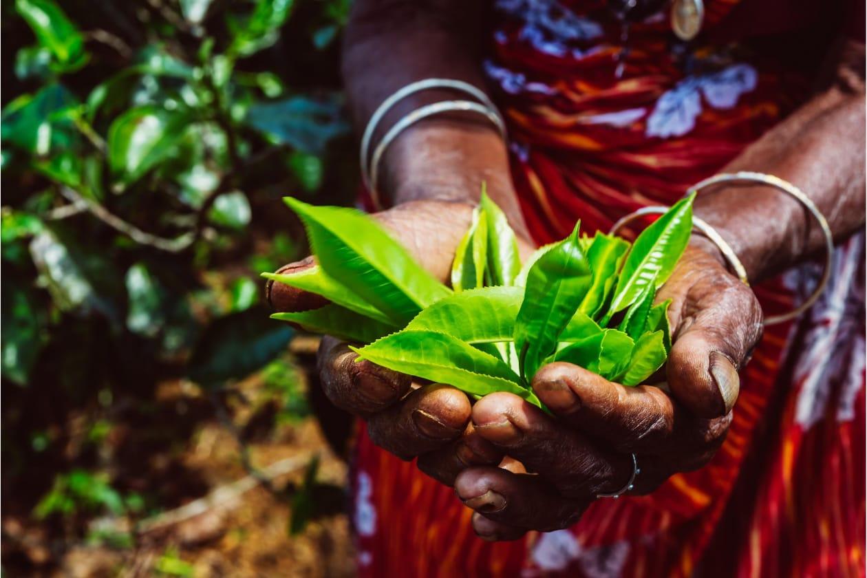 開発途上国の農家